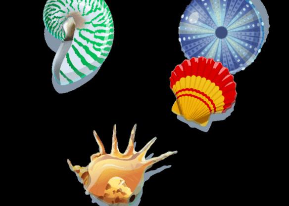 Shells 'n Swells - right image